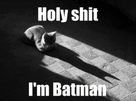 holy-shit-im-batman-gato-sombra-de-sus-orejas